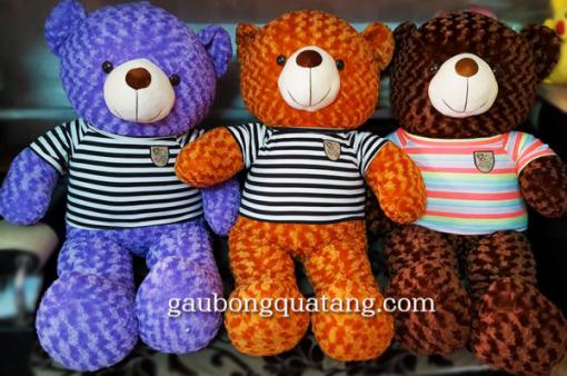 gau bong teddy tot nghiep 1