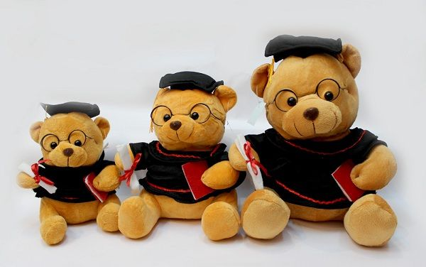 Gấu bông tốt nghiệp giá sỉ